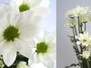 flower_07