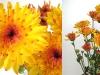 flower_09