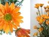 flower_28