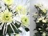 flower_30