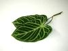 leaf_02