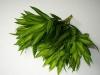 leaf_35