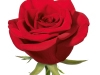 bombero_sideview_red_rose