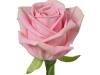 heidi_sideview_nl_rose