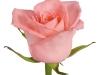 karina_sideview_nl_rose